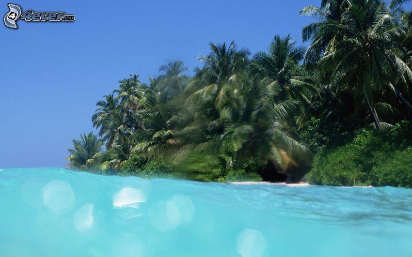 isleta de palmeras, el mar azul