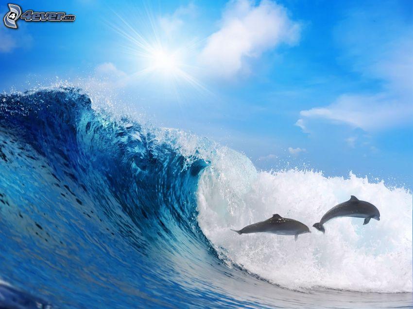 mar, ola, delfines