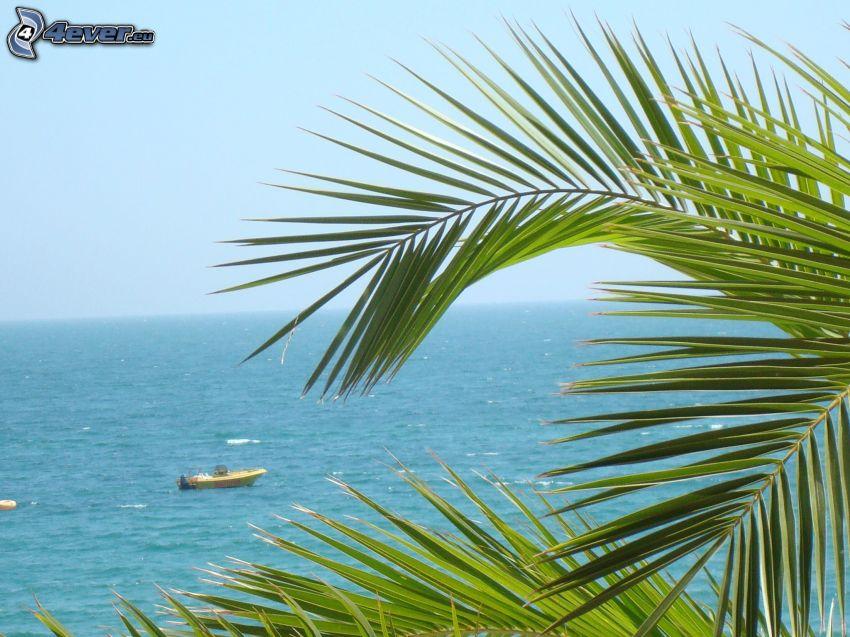 mar, palmera, barco