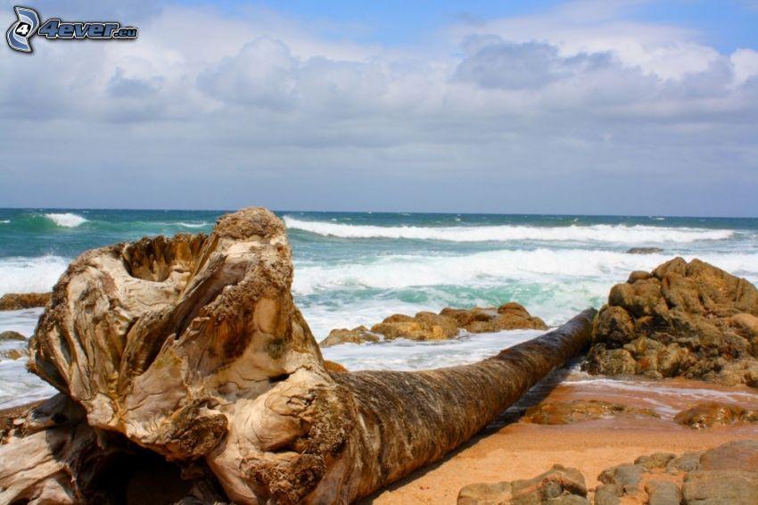mar, tronco, nubes