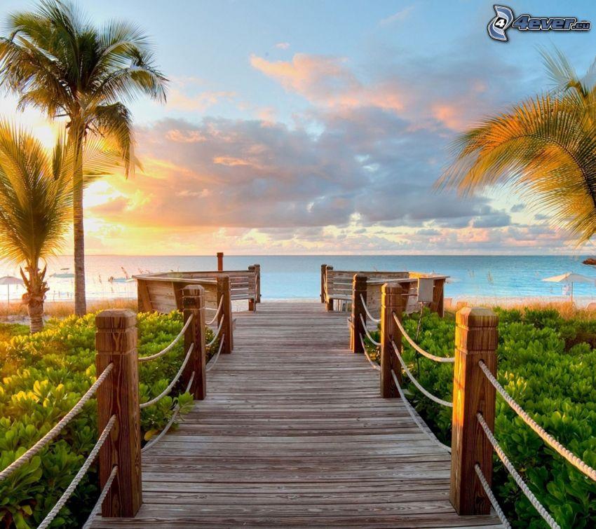 muelle de madera, puesta de sol sobre el mar, palmera