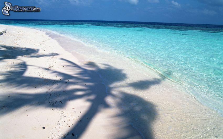 palmera, árbol de sombra, playa de arena, el mar azul