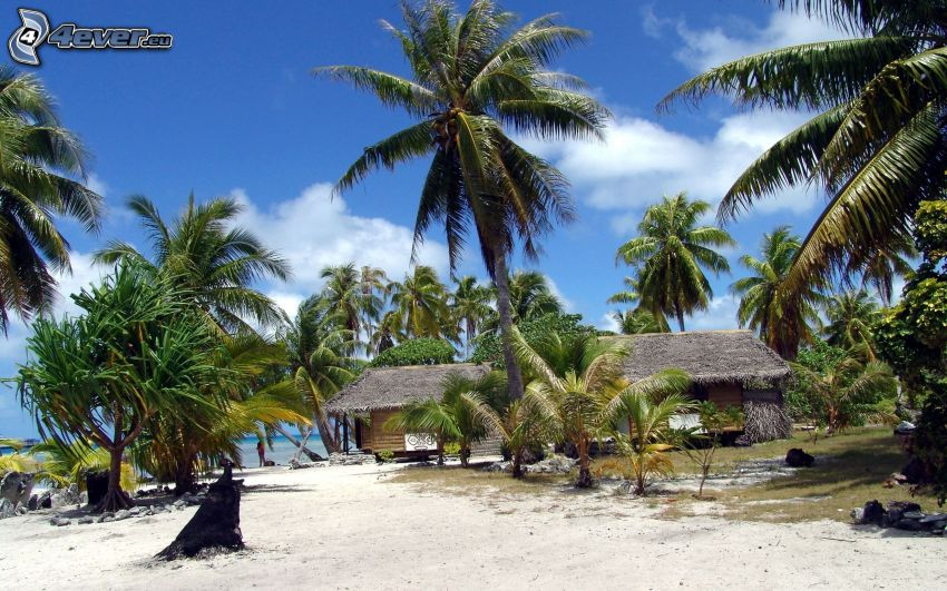 palmera, casas junto al mar, playa