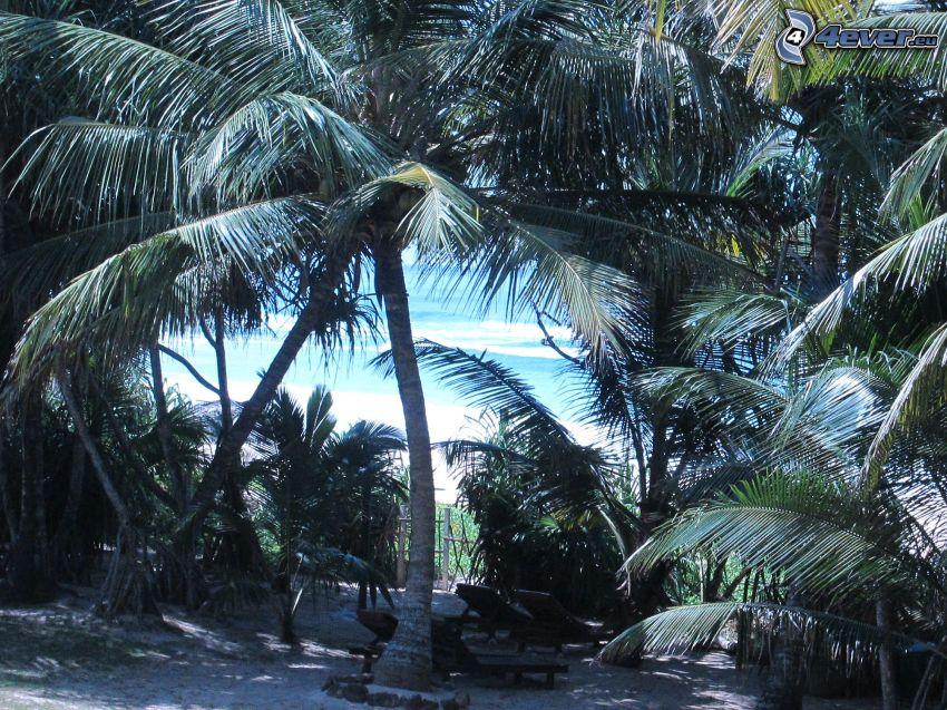 palmera, sillas, mar