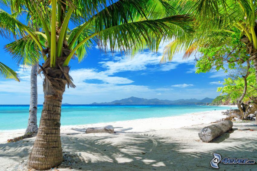 palmera en una playa arenosa, el mar azul