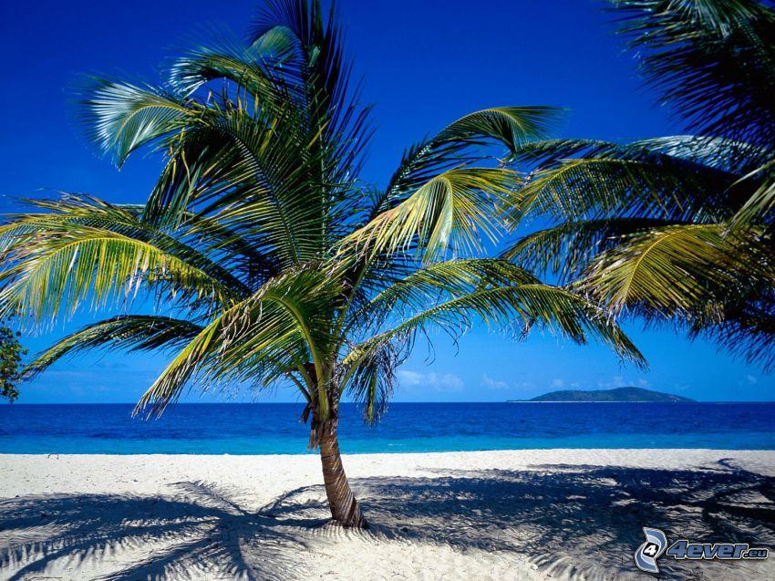 palmera en una playa arenosa, mar