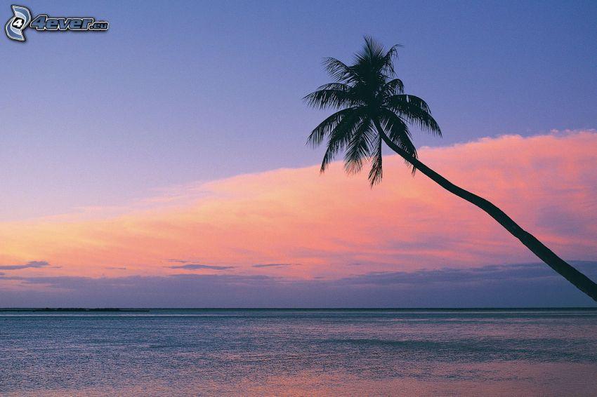palmera sobre el mar, puesta de sol sobre el mar