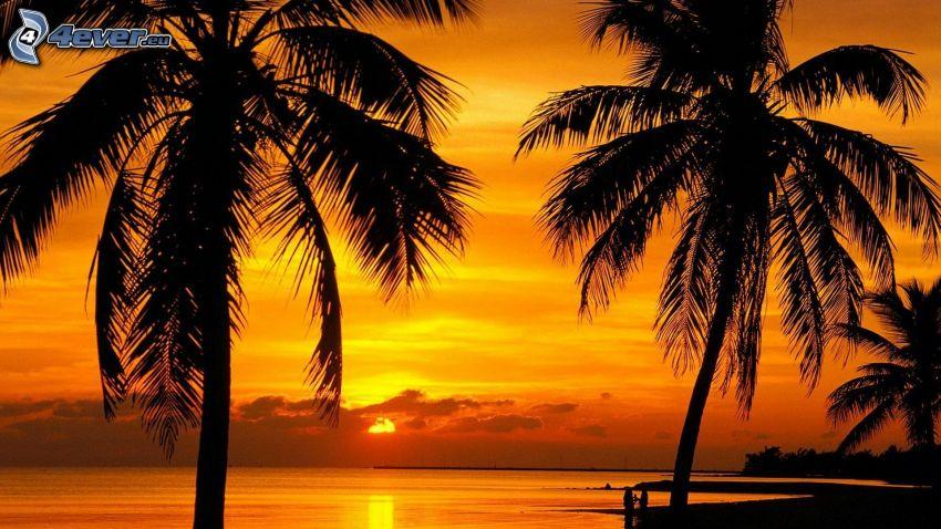 palmeras al atardecer, cielo anaranjado, mar