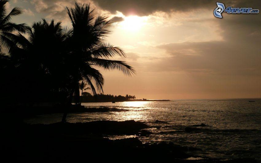 palmeras al atardecer, mar, playa
