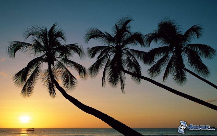 palmeras al atardecer, puesta de sol sobre el océano