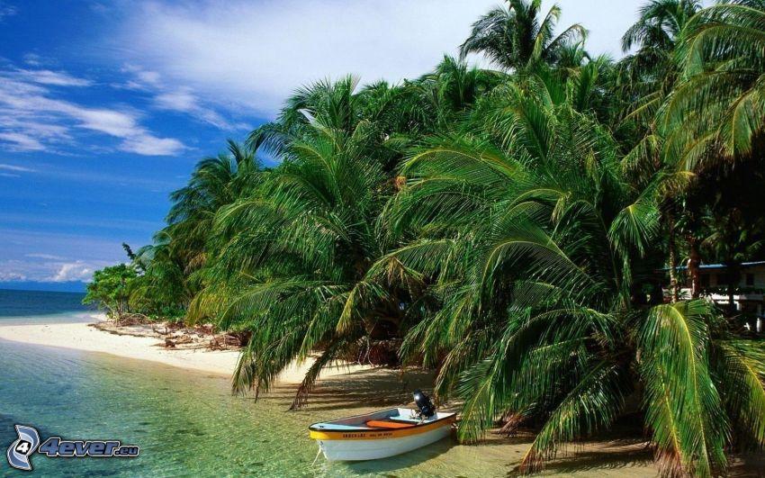 palmeras en la playa, costa, barco