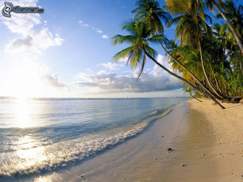 palmeras en la playa, mar