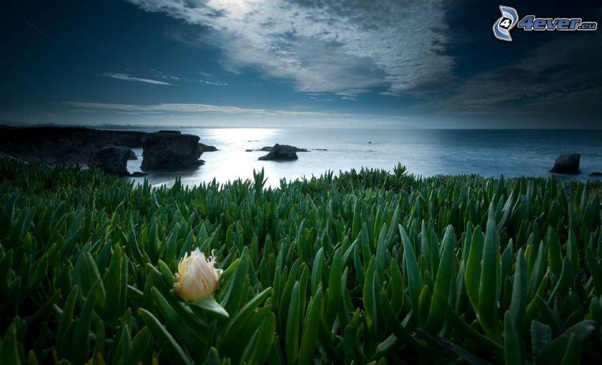 plantas, mar, noche