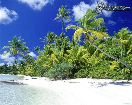 playa, paisaje, palmera