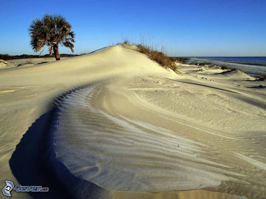 playa, palmera, mar, arena