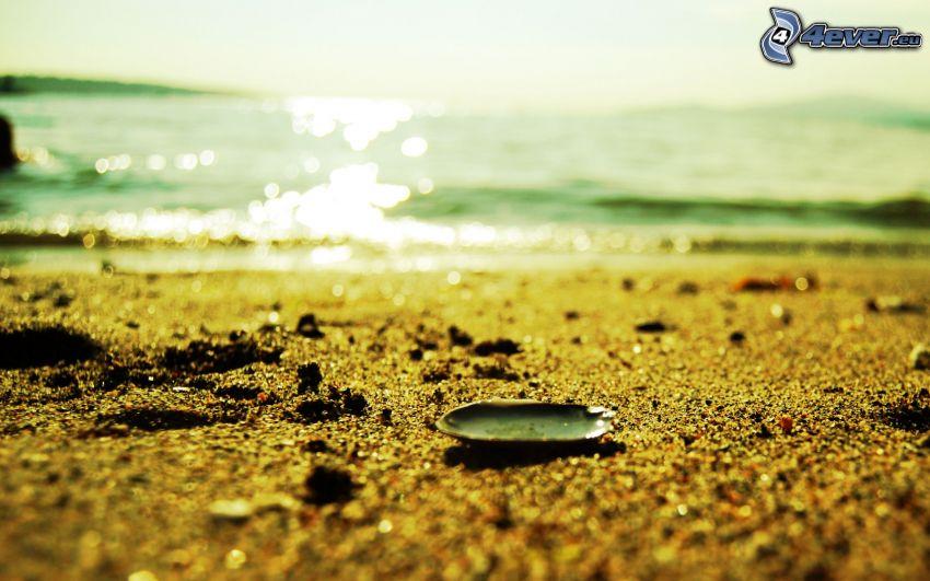 playa de arena, concha, mar