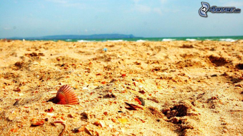 playa de arena, concha