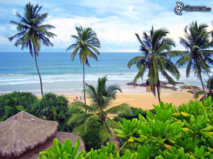 playa de arena, vista al mar, palmeras en la playa