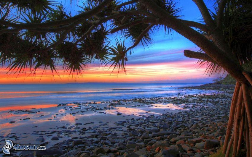 playa rocosa, árbol, cielo de la tarde