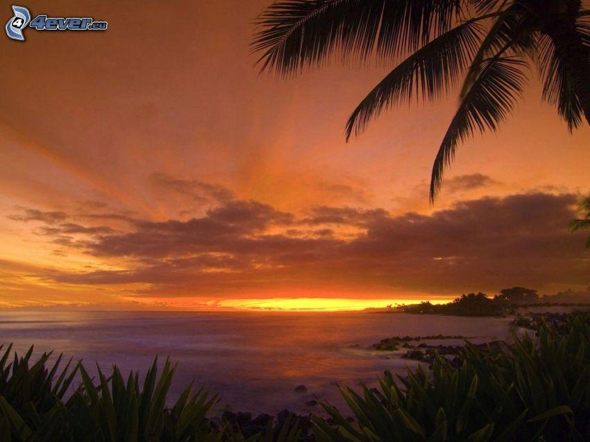 puesta de sol en el mar, palmera