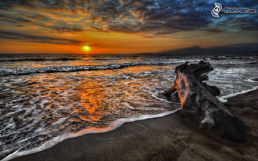 puesta de sol en el mar, tronco seco, HDR