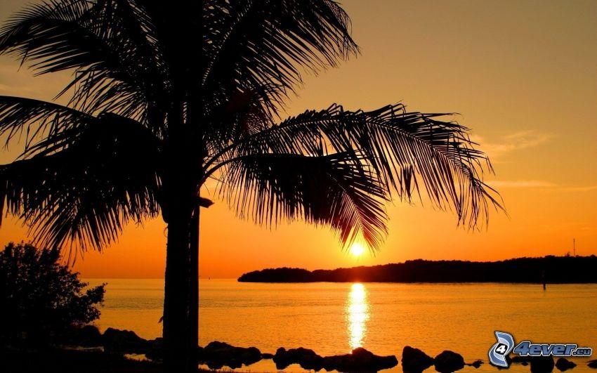 puesta de sol sobre el mar, palmera