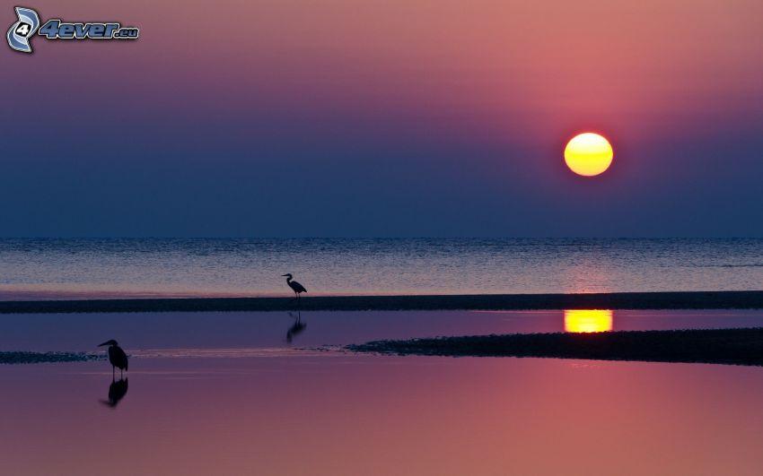 puesta de sol sobre el mar, Pelícanos, playa