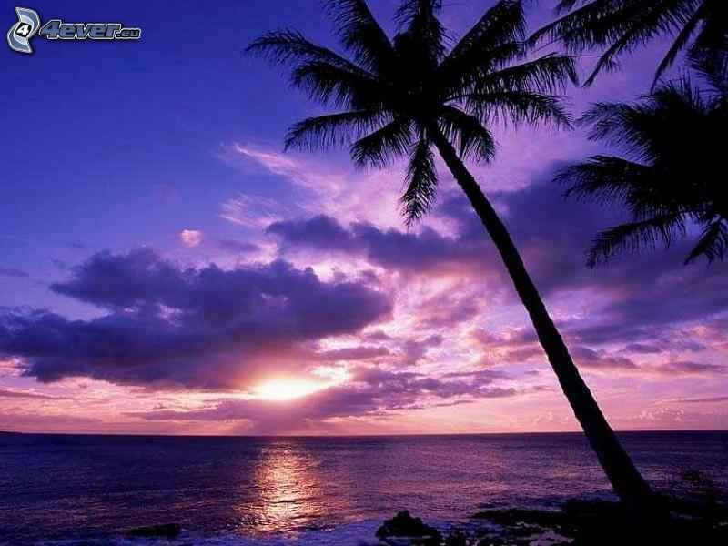 puesta de sol sobre el océano, palmera sobre el mar, cielo púrpura