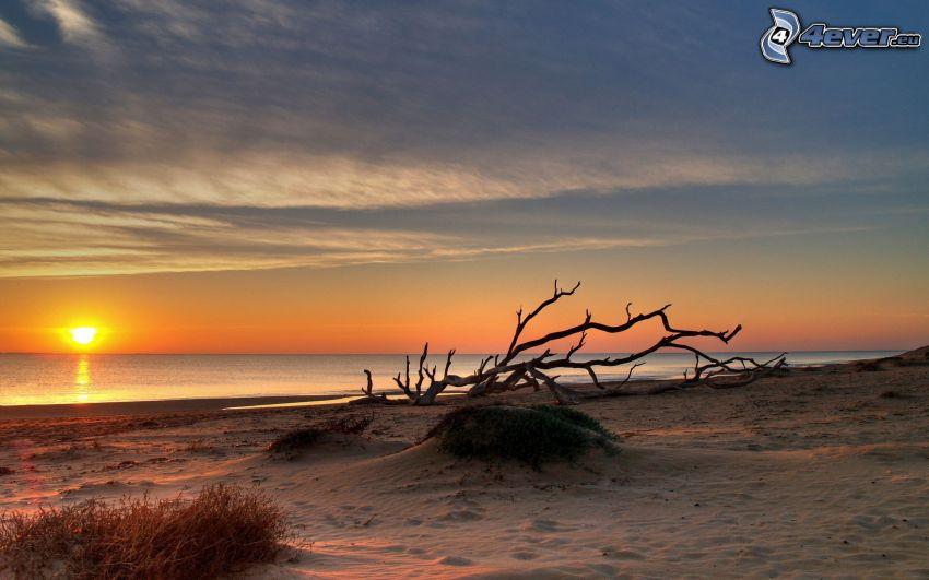 puesta de sol sobre el océano, playa de arena, tronco seco, ramas