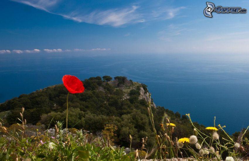 roca, amapola, vista al mar