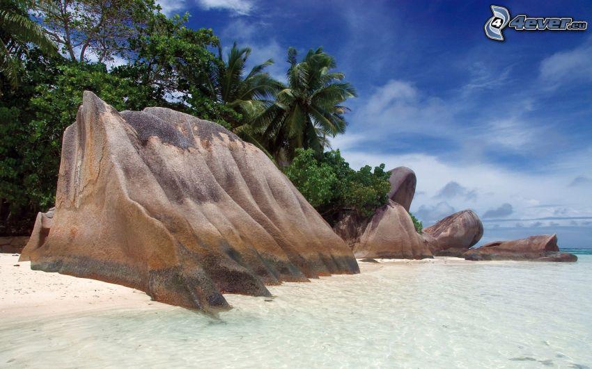 roca en la playa, playa de arena, palmera