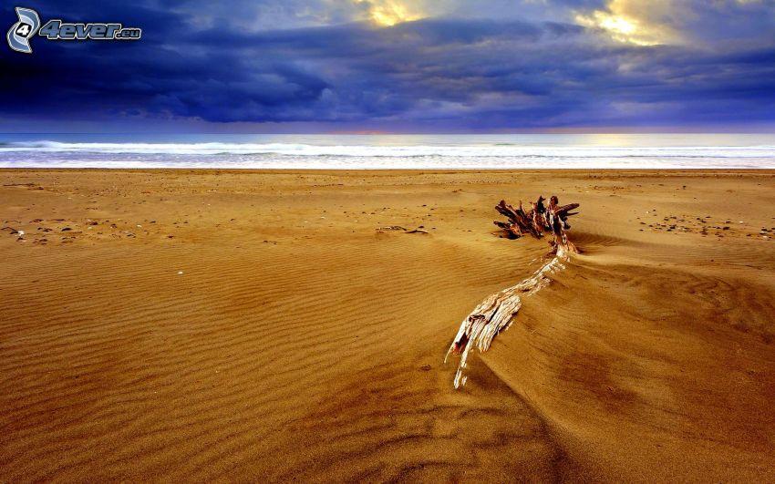tronco seco, playa, mar, nubes oscuras