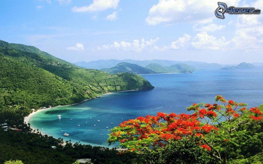 vista al mar, sierra, flores rojas