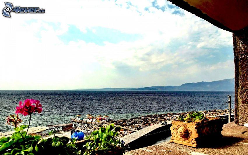 vista al mar, terraza, flor rosa