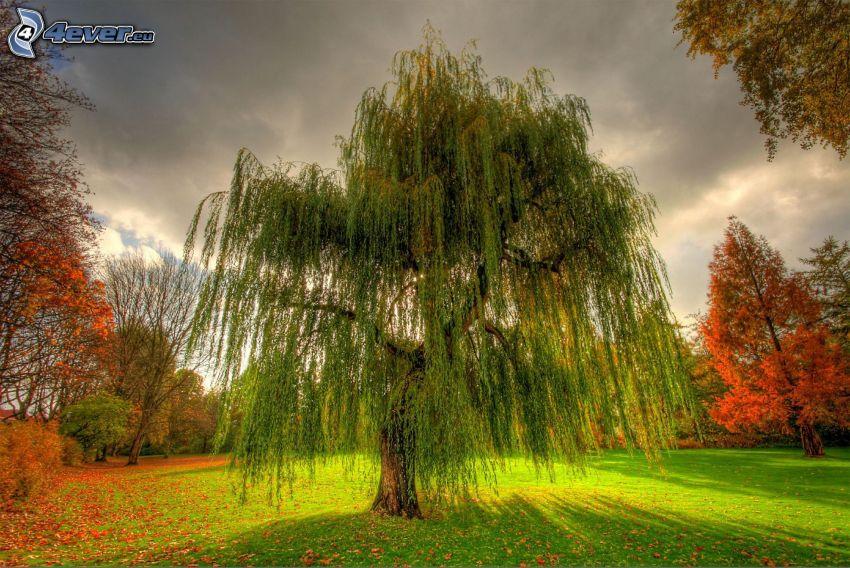 mimbre, césped, árboles otoñales