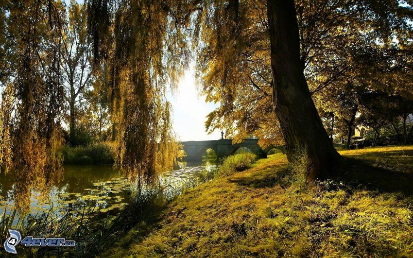 mimbre, puente de piedra, río