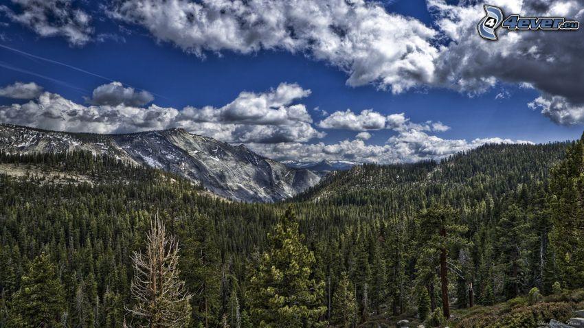 montaña rocosa, bosque, nubes, HDR
