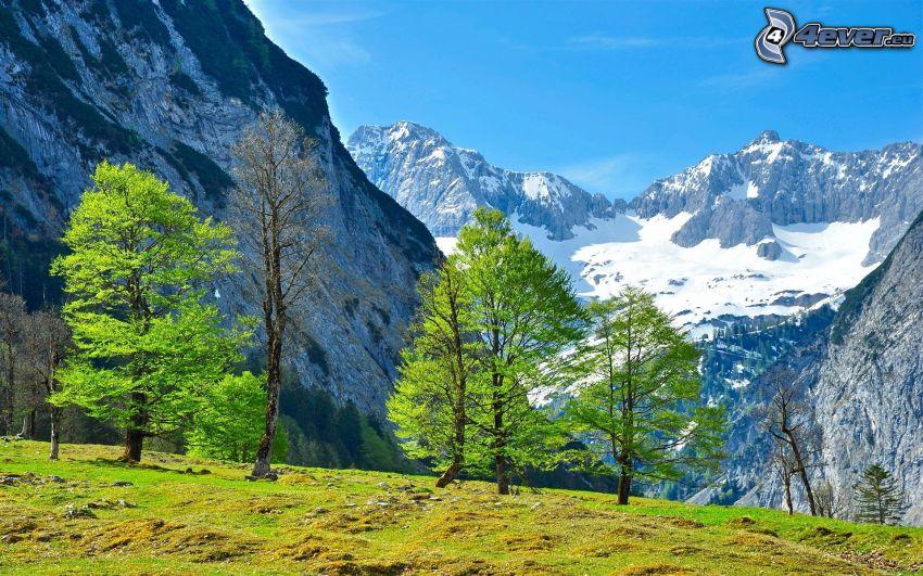 Alpes, montaña rocosa, árboles