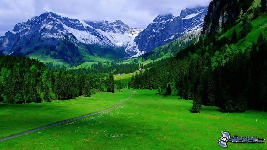 Alpes, montaña rocosa, prado, bosques de coníferas