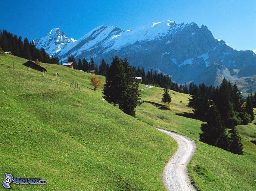 Alpes suizos, montañas, camino, hierba, árboles coníferos
