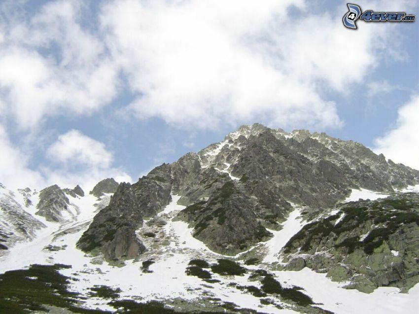 Alto Tatra, cima, nieve, pino enano