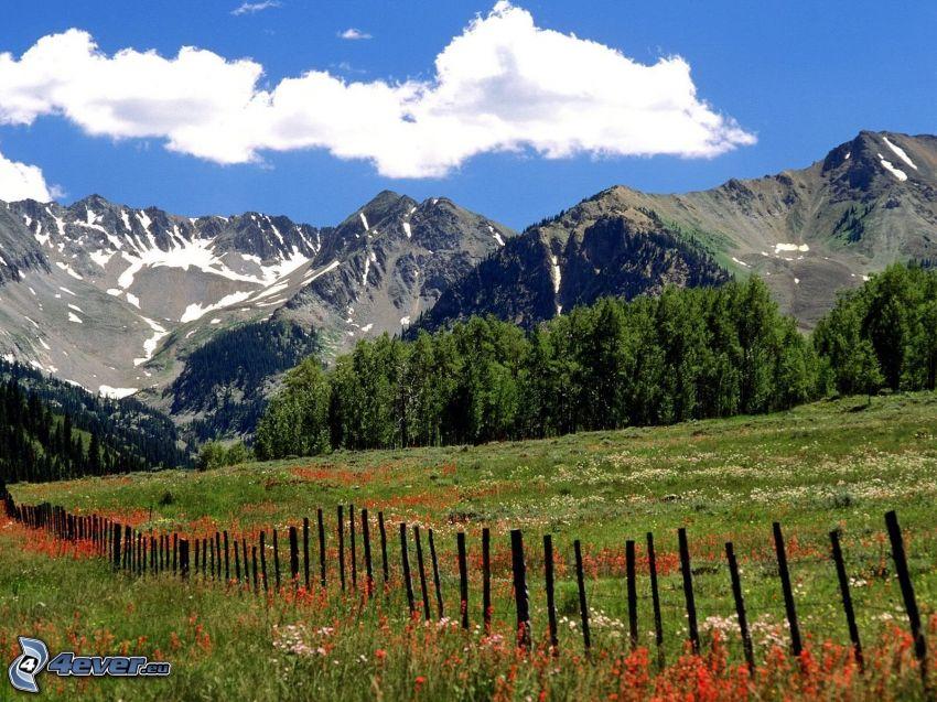 Aspen, Colorado, colina, prado, valla, nube, árboles