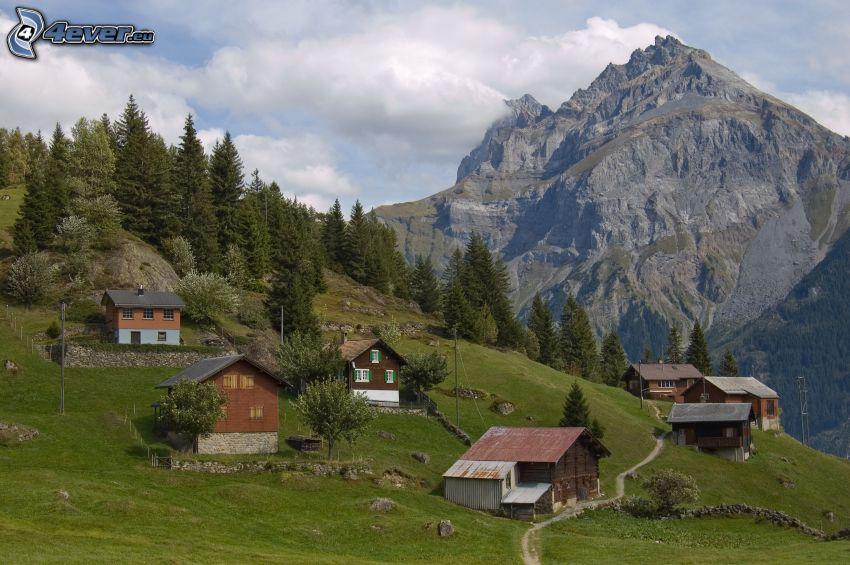 barraca, colina, árboles coníferos, Monte rocoso