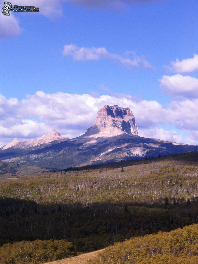 Chief Mountain, bosque