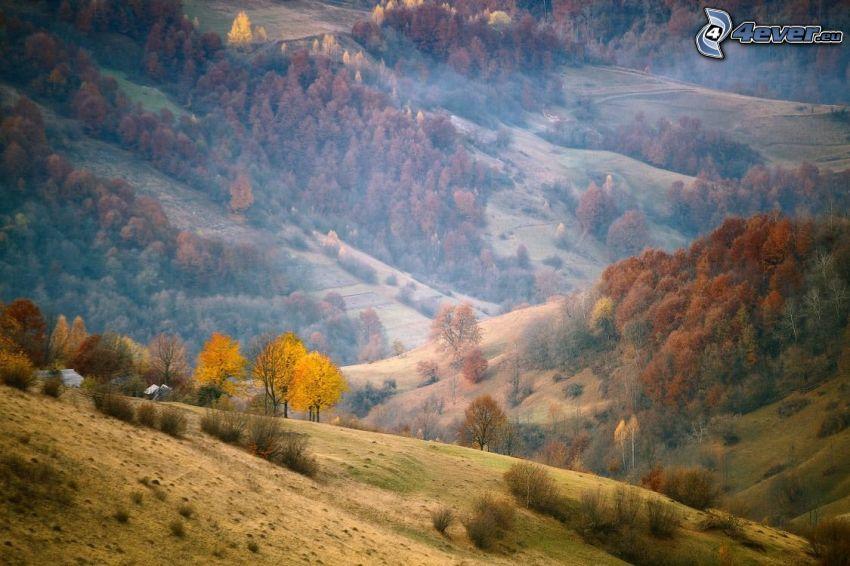 colina, árboles coloridos del otoño