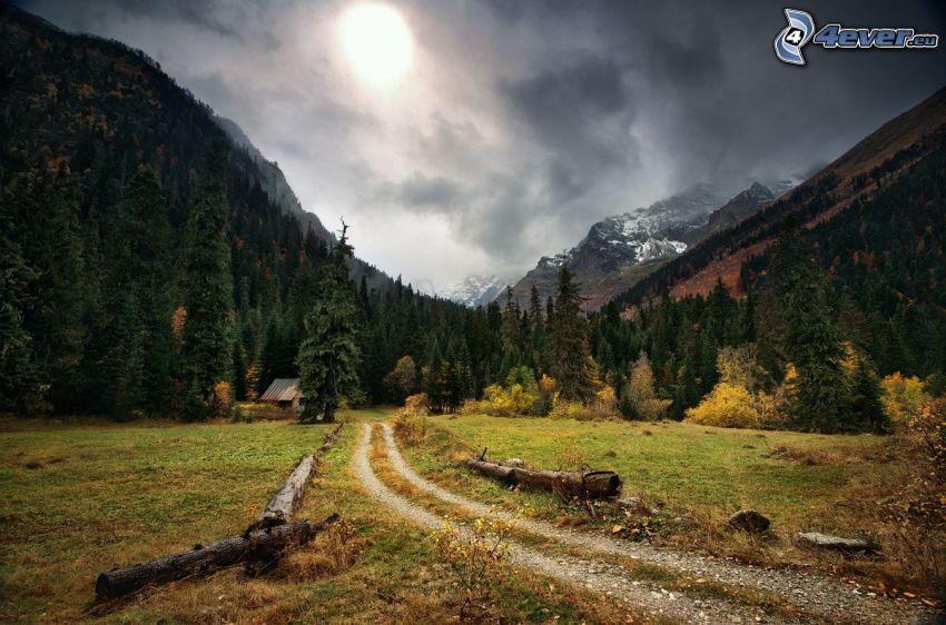 colina, caminos forestales, bosques de coníferas, árboles otoñales