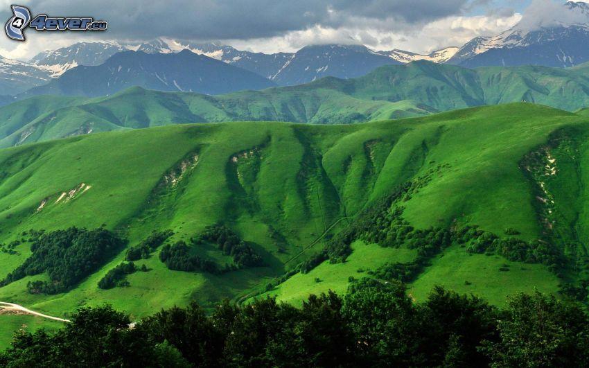 colina, prado verde, árboles, montañas