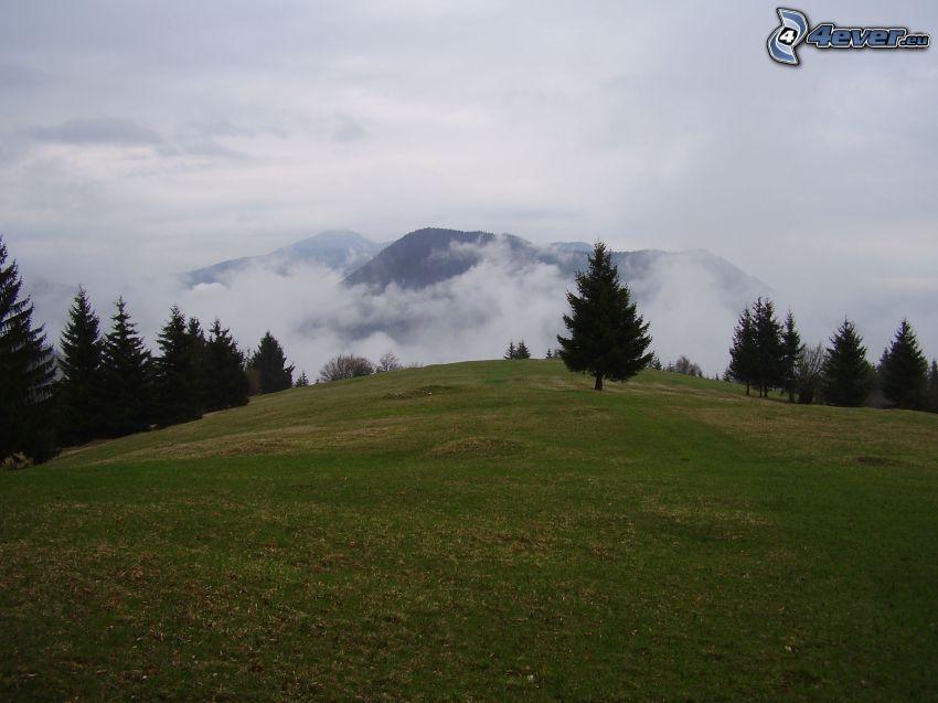 Dedovo, Eslovaquia, prado, montañas en las nubes, árboles coníferos