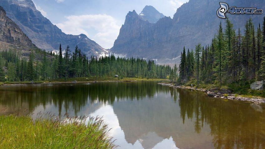 lago, montañas altas, árboles coníferos