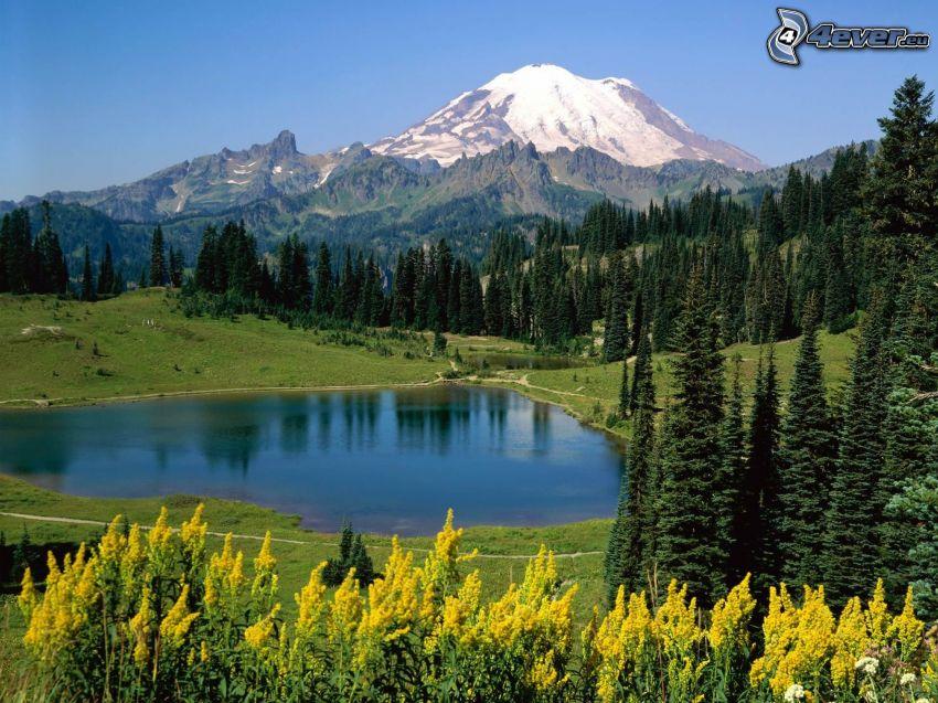 lago de montaña, bosque, montañas, verano